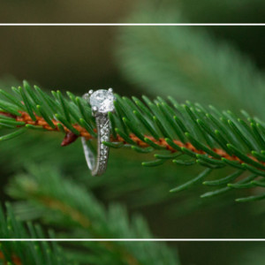 Proposal at Christmas Tree Farm  {NJ Wedding Proposal Photographer Hamilton NJ}